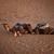 tevék · homokos · sivatag · hegyek · naplemente · nap - stock fotó © johnnychaos