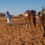 berber man leading caravan hassilabied sahara desert morocco stock photo © johnnychaos