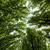 verde · verano · árboles · amplio · hasta · vista - foto stock © johny007pan