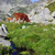 cow on alpine pasture  stock photo © johny007pan