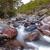 быстро · реке · Корсика · замедлять · затвор - Сток-фото © joningall