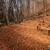 скамейке · лес · Корсика - Сток-фото © Joningall
