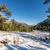 мнение · снега · гор · Корсика · соснового · деревья - Сток-фото © Joningall