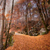 jesienią · spadek · parku · ścieżka · słońce - zdjęcia stock © joningall