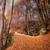 otono · caída · parque · camino · sol - foto stock © joningall
