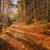 пути · лес · Корсика · деревья - Сток-фото © Joningall
