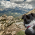 Бордер · колли · собака · глядя · из · гор · назад - Сток-фото © Joningall