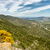дороги · побережье · Корсика · долины · желтые · цветы · передний · план - Сток-фото © Joningall
