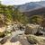 деревья · гор · Корсика · мнение · потока - Сток-фото © Joningall