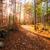パス · 紅葉 · 森林 · コルシカ島 · 木 - ストックフォト © Joningall