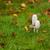 tinta · CAP · mojado · hierba · dos - foto stock © joningall