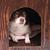 cerrado · dentro · mascota · aislado · blanco · perro - foto stock © jonnysek