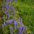 çiçekler · mavi · üzüm · sümbül · Paskalya · çiçek - stok fotoğraf © jonnysek