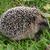 kirpi · güzel · bahar · yeşil · ot · doğa · kış - stok fotoğraf © jonnysek