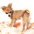 köpek · yavrusu · hayvan · güzel · evcil · hayvan - stok fotoğraf © jonnysek