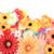 женщины · цветы · педикюр · Nice · цветок · красоту - Сток-фото © jonnysek