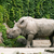 rhinoceros on the rock place stock photo © jonnysek