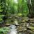 river in the spring forest stock photo © jonnysek