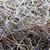 száraz · gyógynövény · mező · fű · levél · szépség - stock fotó © jonnysek