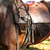 horse saddle stock photo © jonnysek