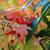 mooie · natuurlijke · seizoen- · kleur · bos - stockfoto © jonnysek