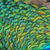 tavuskuşu · tüy · detay · renkli · yalıtılmış · beyaz - stok fotoğraf © jonnysek