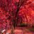 öreg · tölgyfa · ősz · park · hatalmas · nap - stock fotó © jonnysek