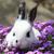 black and white rabbit in the flowers stock photo © jonnysek