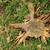 drzewo · zielona · trawa · kwiaty · zielone · łące · lata - zdjęcia stock © jonnysek