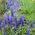 цветы · синий · серый · bokeh · Пасху · цветок - Сток-фото © jonnysek
