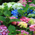 flores · vida · enferrujado · cadeira - foto stock © jonnysek