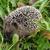 kirpi · çim · tatlı · küçük · doğa · kış - stok fotoğraf © jonnysek