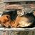dog and small cat stock photo © jonnysek