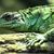 verde · lagarto · isolado · branco · floresta - foto stock © jonnysek