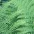 groen · blad · cel · structuur · natuurlijke · textuur · macro - stockfoto © jonnysek