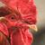 fehér · kakas · piros · címer · étel · madár - stock fotó © jonnysek