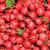Rood · radijs · vers · witte · voedsel · witte · achtergrond - stockfoto © jonnysek