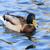 мужчины · крыльями · пруд · воды · красоту · зеленый - Сток-фото © jonnysek