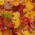 autumn leaves natural background stock photo © jonnysek