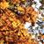 levelek · ősz · kék · ég · fényes · égbolt · levél - stock fotó © jonnysek