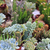 désert · sauvage · usine · cactus · sol - photo stock © jonnysek