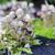 small mushrooms forest stock photo © jonnysek