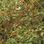 vermelho · rosa · quadris · ramo · folha - foto stock © jonnysek