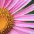 花 · 詳細 · 新鮮な · バイオレット · 春 · 自然 - ストックフォト © jonnysek