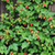 floresta · frutas · foto · tiro · comida · natureza - foto stock © jonnysek