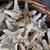 беспозвоночное · животное · коллекция · африканских · беспозвоночные · насекомые - Сток-фото © jonnysek