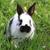 赤ちゃん · 白 · ウサギ · 草 · バニー · 食べ - ストックフォト © jonnysek