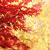 明るい · 紅葉 · 抽象的な · ぼけ味 · 自然 · オレンジ - ストックフォト © jonnysek