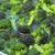 Broccoli soaking stock photo © joruba