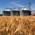 Farm, wheat field with grain silos for agriculture stock photo © joruba
